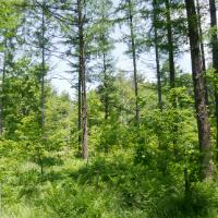 森と生きる